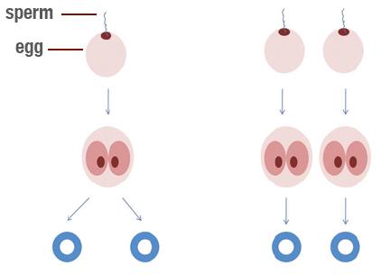 xet nghiem ADN cap song sinh - hop tu