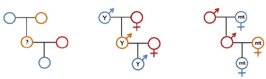 xet nghiem ADN mot ong hoac ba